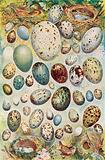 The Eggs and Nests of the Best-Known British Birds