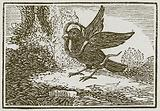 The Raven and Serpent