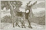 The Stag and the Fawn