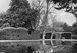 The Yew Walk