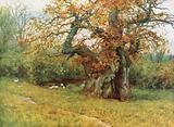 The Waller Oak, Coleshill