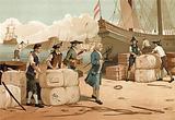 Bernard de Jussieu bringing the cedar of Lebanon to England