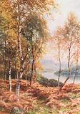 Birches by Loch Achray, Perthshire