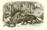 Iguanodon and Megalosaurus, Cretaceous System