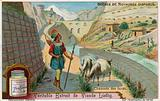 Road of the Incas