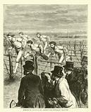 Athletic Sports at Brompton, Hurdle Racing