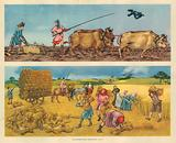 Ploughing and Harvesting 14th Century