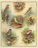 Insect-eating birds