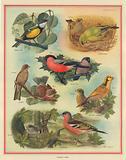 Resident Birds