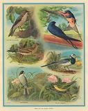 Birds that are Summer Visitors