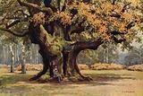 The Major Oak, Thoresby Park