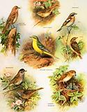 Insect eating birds