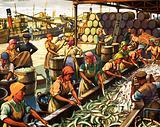 Herring II-Preparing the fish for export