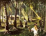 A rubber plantation in Malaya