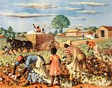Picking cotton by hand in the USA
