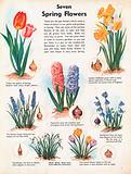 Seven Spring Flowers