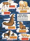 Seven animals from the Arctic