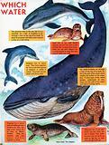 Water-loving animals