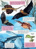Flying creatures