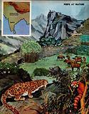 Himalayan animals