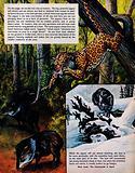 Jaguar and Lynx