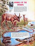 Swamp animals
