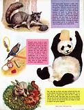 Animals at play