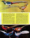 Peafowl and pheasants