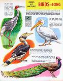 Long birds