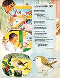 An artist paints a Robin on his art board, the robin visits the vet and eats red berries