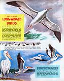Long-winged birds