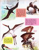 Long-winged birds