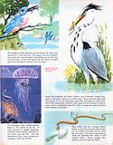 Fishing creatures