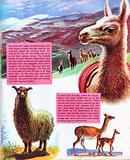 Mountain animals