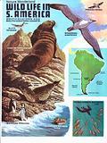 S American wildlife