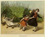 Scarlet Runners