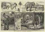 The Career of a Rogue Elephant