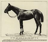 Sir Visto, the Winner of the Derby Stakes of 1895