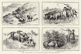 The Troubles of an Australian Cattle-Drover