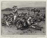 The Care of Horses in South Africa, fagged out on a Forced March