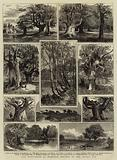 The Dedication of Burnham Beeches to the Public Use