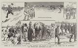 Notes at a Cricket-Match played at Suez between the Eleven of England (on their Way to Australia) …