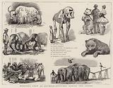Barnum's Show at Olympia, Sketches behind the Scenes