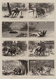 The Escape and Recapture of a Baby Elephant in Ceylon