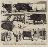 The Cattle Show, leaves from our Artist's Sketch-Book