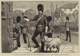 St David's Day, the Goat and the Drum-Major of the Royal Welsh (23rd) Fusiliers
