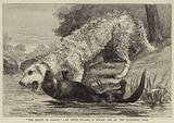 """""""The Death of Raglan"""", an Otter killing a Hound, one of the Ulverston Pack"""