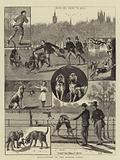 Man-Hunting in the London Parks