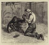 Tending the Invalid, a Recent Sketch at the Zoological Gardens