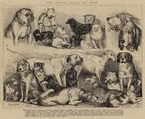 The Crystal Palace Dog Show